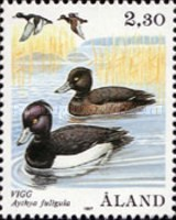[Birds - Ducks, type P]