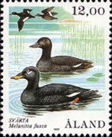 [Birds - Ducks, type Q]