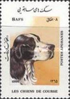[Dogs, type AER]