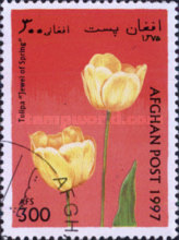 [Flowers - Tulips, type ANP]