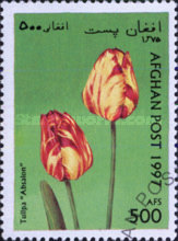 [Flowers - Tulips, type ANR]