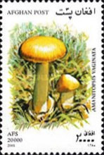 [Mushrooms, Typ AVH]