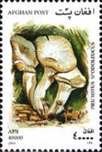 [Mushrooms, type AVJ]