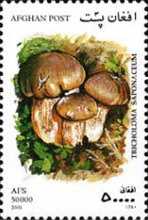 [Mushrooms, type AVK]