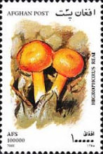 [Mushrooms, Typ AVM]