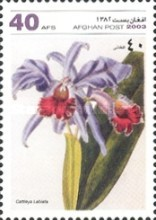 [Flowers - Orchids, type AWG]
