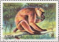 [Animals from the Wild, type AXY]