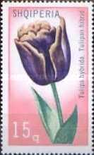 [Flowers - Tulipans, Typ ALB]