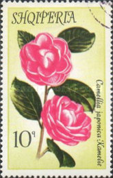 [Flowers - Camellias, Typ AOB]