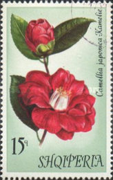 [Flowers - Camellias, Typ AOC]