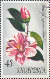 [Flowers - Camellias, Typ AOE]