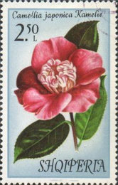 [Flowers - Camellias, Typ AOG]