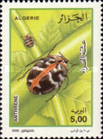 [Insects, Typ AMK]
