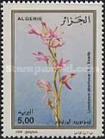 [Orchids, Typ AMR]