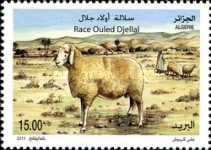 [Fauna - Sheeps of Algeria, Typ BAI]