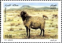 [Fauna - Sheeps of Algeria, Typ BAJ]