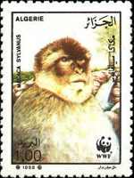 [Endangered Animals - Barbary Ape, Typ ZY]