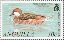 [Anguillian Birds, type ARF]
