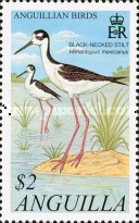 [Anguillian Birds, type ARI]