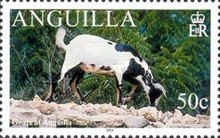 [Goats of Anguilla, Typ AUI]