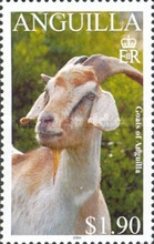 [Goats of Anguilla, Typ AUM]