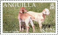 [Goats of Anguilla, Typ AUN]