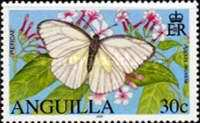[Butterflies of Anguilla, type AVY]
