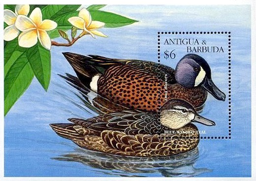 [Ducks, type ]