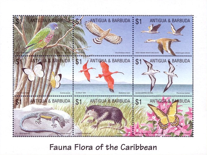 [Fauna and Flora of the Caribbean, type ]