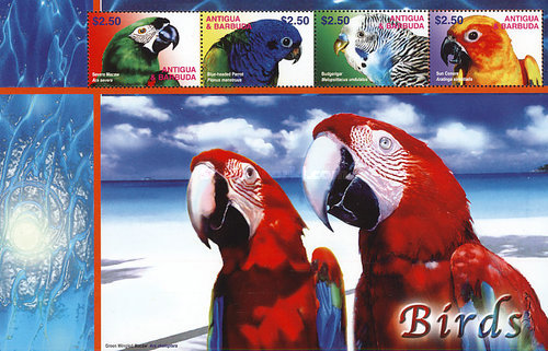[Macaws and Wild Ibis, type ]