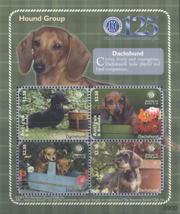 [The 125th Anniversary of the American Kennel Club, type ]
