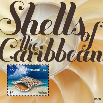 [Marine Life - Shells of the Caribbean, type ]