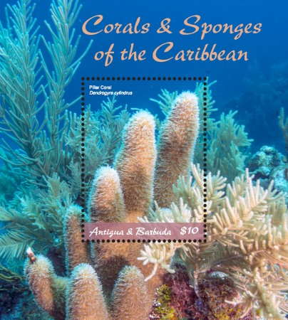 [Marine Life - Corals and Sponges of the Caribbean, type ]