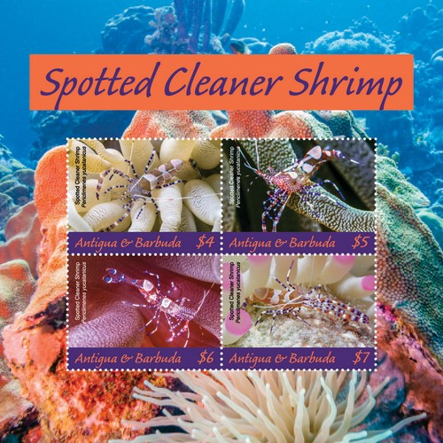 [Marine Life - Spotted Cleaner Shrimp, type ]