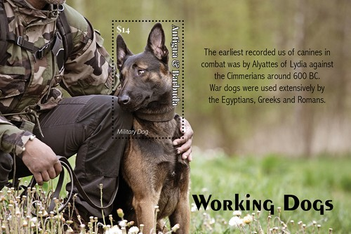 [Working Dogs, type ]