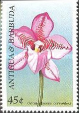 [Orchids, type BST]