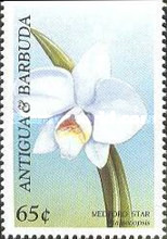 [Orchids, type BSU]