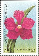 [Orchids, type BSV]