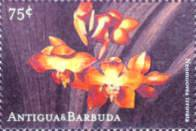 [Orchids, type DCG]