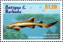 [Sharks of the Caribbean, type EYI]