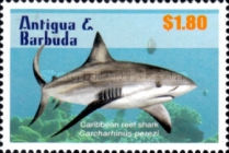 [Sharks of the Caribbean, type EYJ]