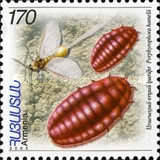 [Insects, type PG]