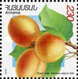 [Apricots, type QW]