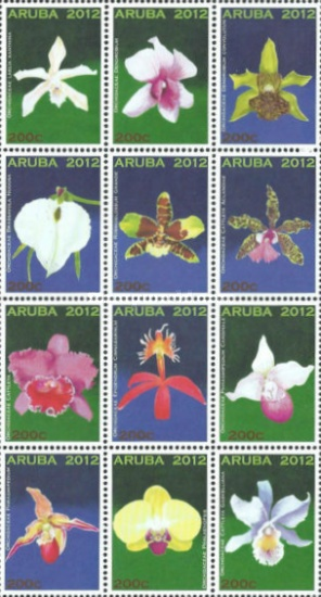 [Flowers - Orchids, Typ ]