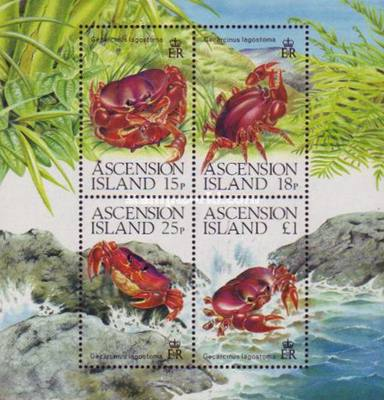 [Ascension Land Crabs, Typ ]