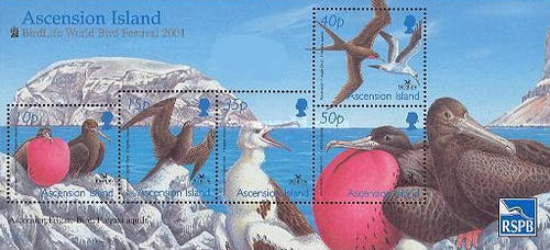 [Birdlife World Bird Festival - Ascension Frigatebirds, Typ ]