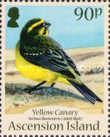 [Birds - Yellow Canary, Typ AME]