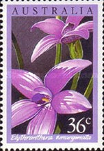 [Orchids, type AFZ]