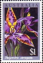[Orchids, type AGC]