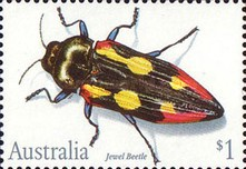 [Insects, type APL]